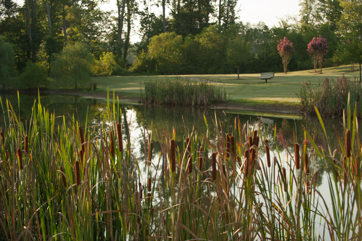 Outdoor - cattails & pond